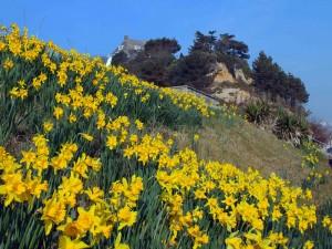 Spring---Branksome-Dene-Chi